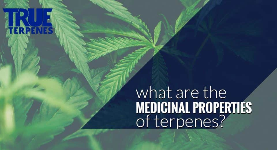 Terpenes